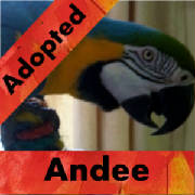 andee-adopted-thumb.jpg