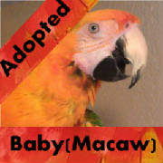 baby-macaw-adopted-thumb.jpg