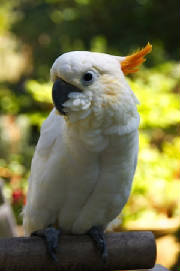 baby1cockatoo.jpg