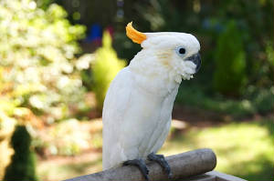 baby2cockatoo.jpg