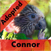 connor-adopted-thumb.jpg