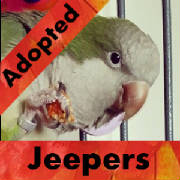 jeepers-adopted-thumb.jpg