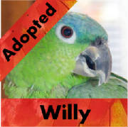 willy-adopted-thumb.jpg