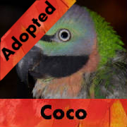 coco-adopted-thumb.jpg