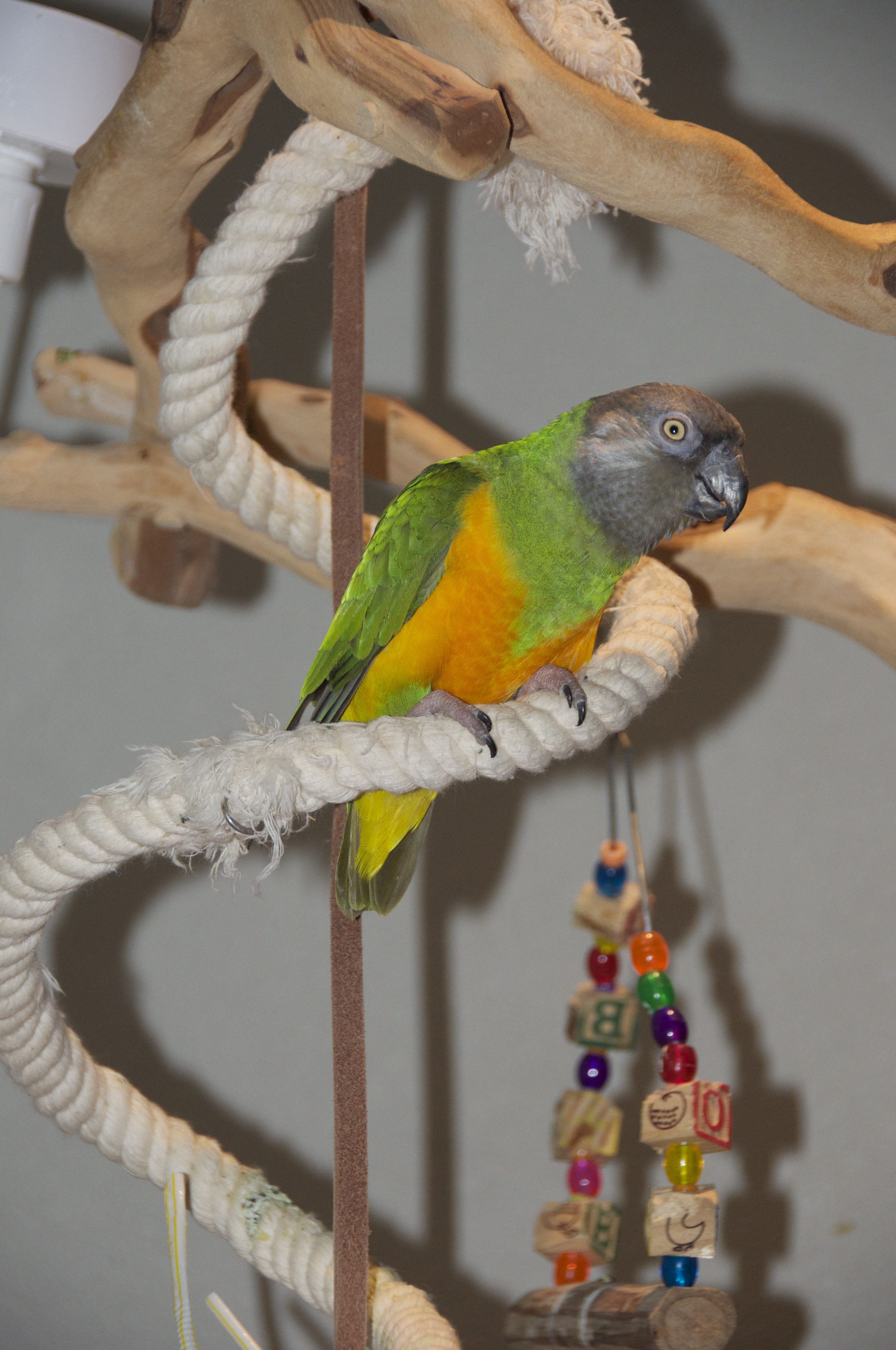 merlin-senegal7.jpg
