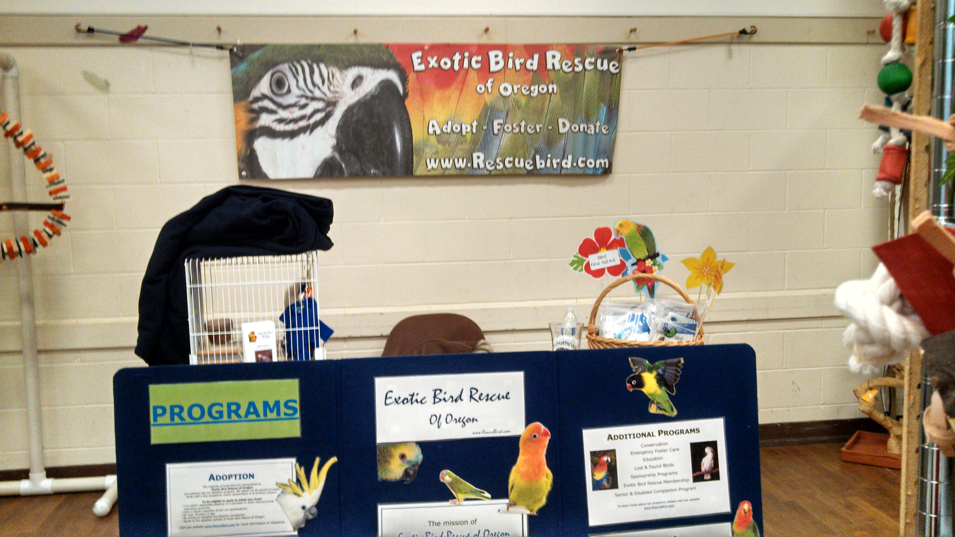 seattle-parrot-expo2.jpg